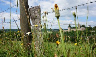 Der Burgweg-Familienausflug nach Stadt Blankenberg